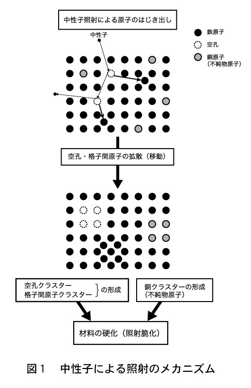 図1・中性子による照射のメカニズム