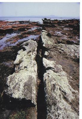 三浦半島活断層群南下浦断層